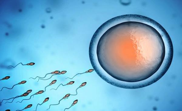 tratamento_fertilizacao+in+vitro